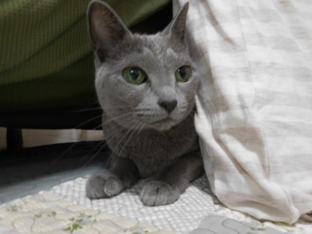 猫154②.JPG