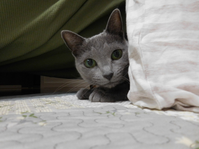 猫154③.JPG