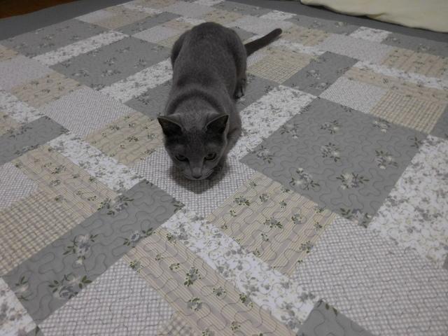 猫154④.JPG