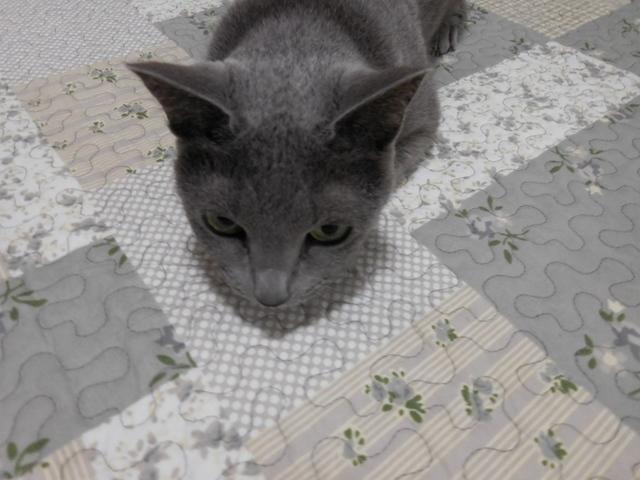 猫154⑤.JPG