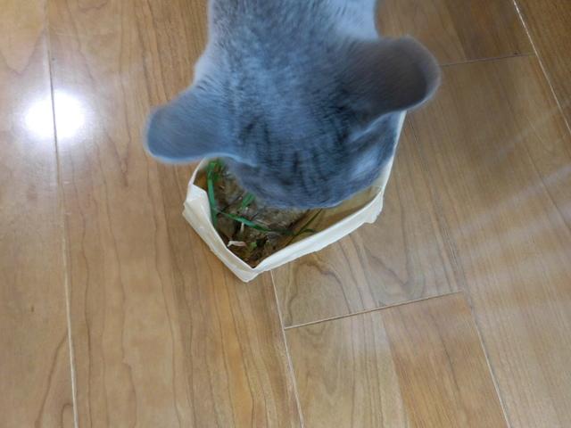 猫157⑦.JPG