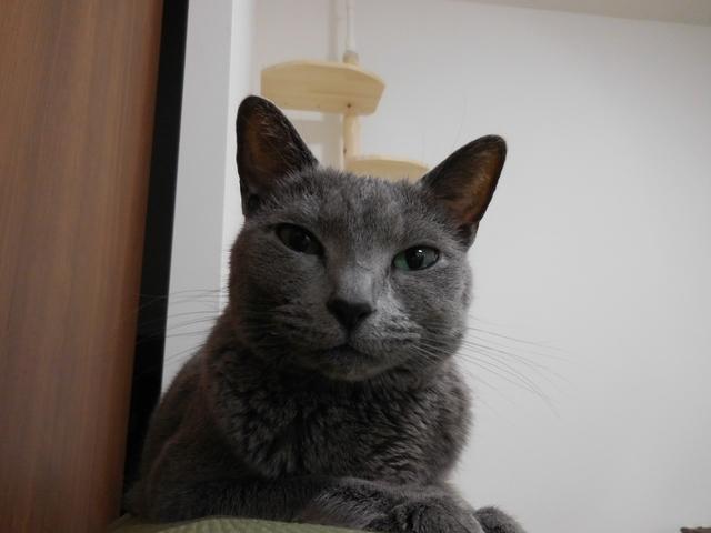 猫168②.JPG