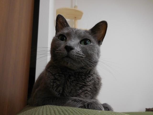猫168③.JPG