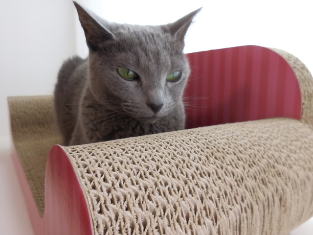 猫168⑦.JPG