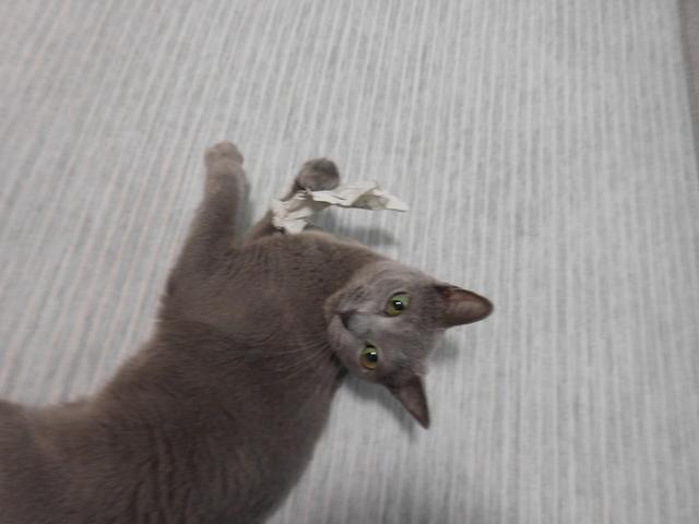 猫179④.JPG