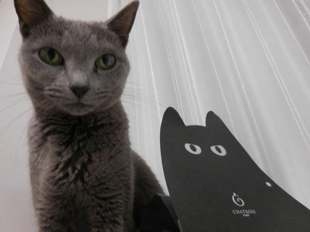 猫181①.JPG