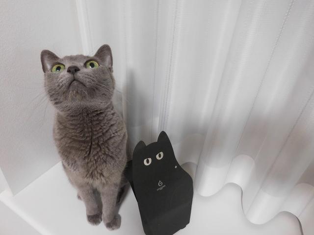 猫181⑤.JPG
