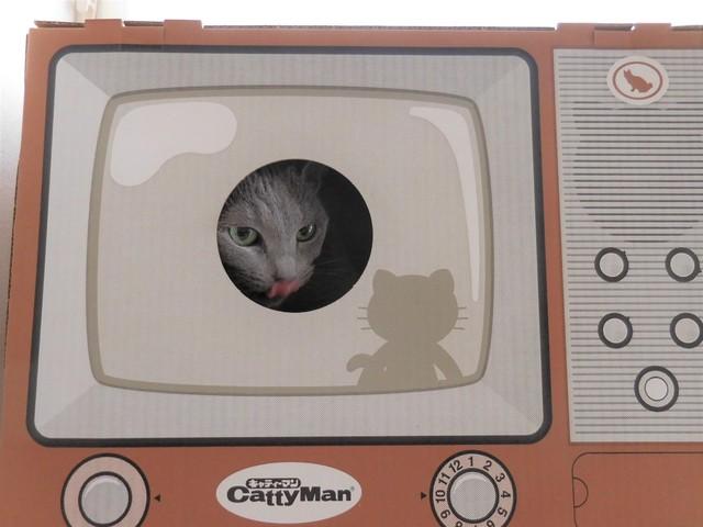 猫184⑫.JPG