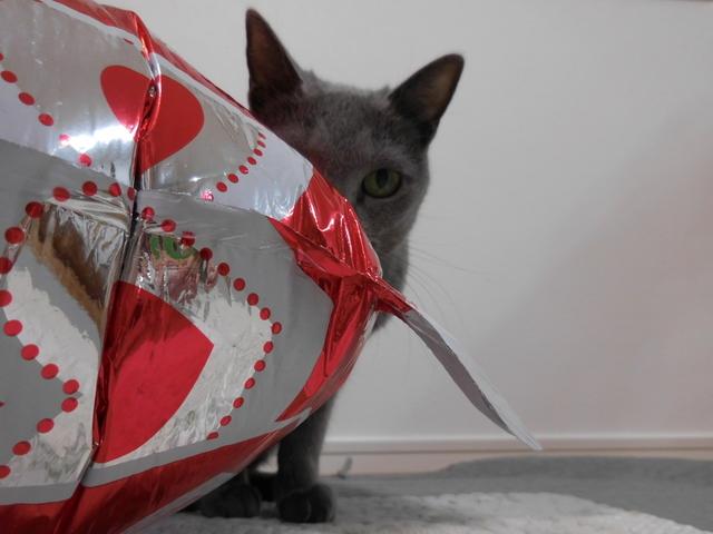 猫185④.JPG