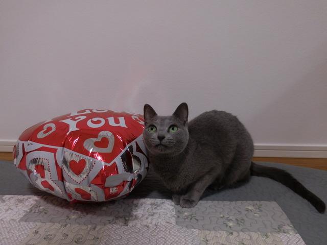 猫185⑤.JPG