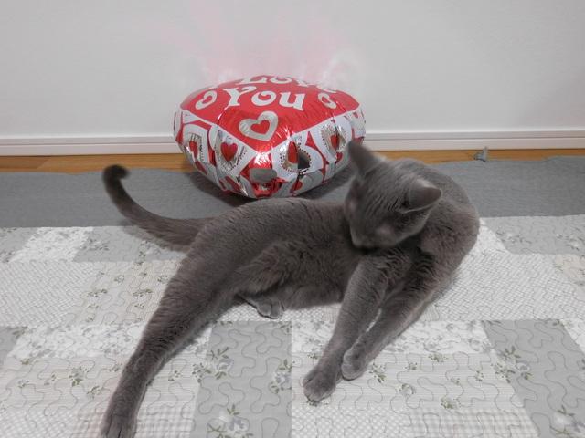 猫185⑥.JPG