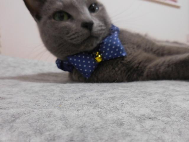 猫186④.JPG