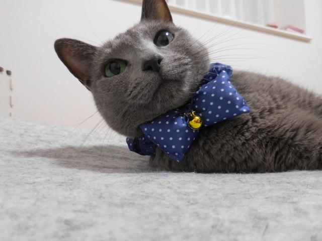 猫186⑤.JPG